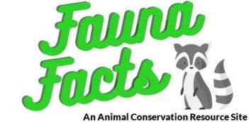 Fauna Facts